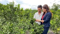 Lâm Đồng: Nông dân huyện Lâm Hà có thêm 200 triệu để trồng cây ăn trái, chăm sóc cà phê, trồng dâu dâu nuôi tằm