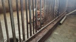 """Video """"Ăn thú rừng, rưng rưng người khóc"""" (kỳ 2): Đường vào """"hang hổ"""" khét tiếng vừa bị Công an Nghệ An triệt phá"""
