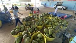 Covid-19 Đắk Lắk: Vựa trái cây đặc sản lớn nhất Tây Nguyên căng mình tìm nơi bán sản phẩm