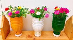 Clip: Hướng dẫn tái chế chai nhựa trồng rau sạch tại gia, tiết kiệm lại bảo vệ môi trường