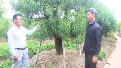 """Thái Bình: """"Vác tù và"""" cho chi hội, ông nông dân """"vác"""" luôn cây làm giàu về, cả khu phố thu 30 tỷ/năm"""
