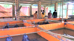 Đồng Nai: Nông dân giàu nhờ xây bể xi măng nuôi lươn không bùn dày đặc, nhiều người kéo đến xem
