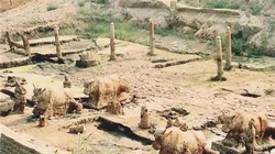 Giải mã lời nguyền 'quốc bảo' trâu sắt đúc từ 1200 năm trước trồi lên từ dưới lòng sông