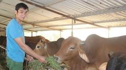 Lập thu mà vẫn nắng nóng kỷ lục, cách nào bảo vệ đàn vật nuôi an toàn?