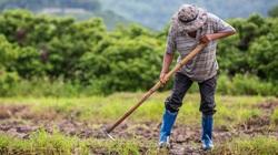 68% nông dân ở 4 quốc gia Đông Nam Á coi biến đổi khí hậu là thách thức với sản xuất lương thực