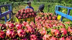 Đang ầm ầm thu gom cả triệu tấn, tại sao Trung Quốc đột ngột giảm mua loại trái cây này của Việt Nam?