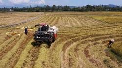 """Đà Nẵng: Nông dân gấp rút thu hoạch lúa, hoa màu """"chạy"""" bão Conson"""