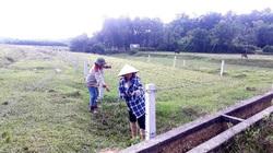 Lạ chưa, ở tỉnh Nghệ An có hộ dân thuê ruộng rồi để cỏ dại mọc um tùm mà vẫn giàu lên được
