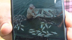 Hà Nam: Người đàn ông dùng thuốc sâu đổ xuống ao cá nhà hàng xóm sau khi xảy ra mâu thuẫn