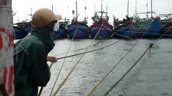 Đà Nẵng sẽ sơ tán gần 60.000 người để đối phó bão Côn Sơn