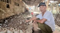 Ninh Bình: Nông dân U70 trồng nấm la liệt, lời 200 triệu/năm