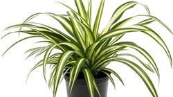 7 loại cây cảnh trồng trong nhà cực tốt, không cần nhiều nắng vẫn xanh tươi