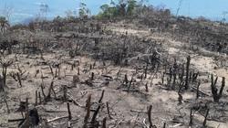 Phá trắng hơn 5ha rừng tự nhiên ở Bình Định giáp ranh với Gia Lai