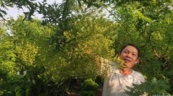 Thái Bình: Trồng thứ cây tốt um ít phải chăm, gặp năm hoa giá cao, nông dân ở đây mừng như trúng số.