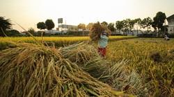 Nông dân thiếu vốn tái sản xuất, nguy cơ thiếu hụt  lương thực thực phẩm cuối năm
