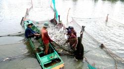"""430 tấn cá tiêu biểu của TP.HCM """"bơi lừ đừ"""" vào Bách Hóa Xanh"""