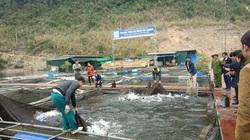 """Tuyên Quang: Nuôi toàn cá đặc sản trên hồ Na Hang, nông dân nơi đây """"sống khỏe"""" giữa dịch Covid-19"""