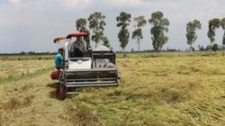 Agribank đã giải ngân hơn 17.600 tỷ đồng cho vay thu mua lúa gạo tại Đồng bằng sông Cửu Long