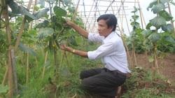 Giúp nông dân Bắc Ninh phục hồi sản xuất sau dịch