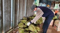 Đắk Lắk: Krông Búk tạm dừng mua bán nông sản và cấp giấy đi rẫy cho nông dân