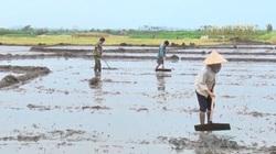 Đề xuất hỗ trợ lúa giống cho các tỉnh ĐBSCL sản xuất vụ Đông Xuân 2021-2022