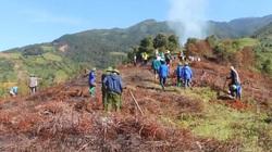 Yên Bái: Trồng thử nghiệm 6 hecta cây hạt dẻ Trùng Khánh tại Mù Căng Chải