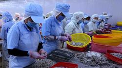 Nghịch lý: Nhu cầu mua thủy sản của thế giới rất cao nhưng doanh nghiệp chỉ dám ký hợp đồng dè dặt