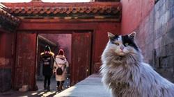 Trong Cố cung có gần 200 con mèo, tại sao du khách không thấy chúng?