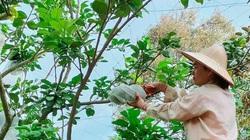 Đắk Lắk: Trên trồng bưởi da xanh, dưới trồng thêm cây gì mà mỗi ngày kiếm 200-300.000 đồng?