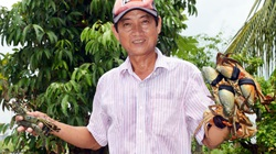 Tôm hùm Mỹ nhập về Việt Nam bán giá cao sao tôm, cua Cà Mau mang lên TP.HCM lại khó?