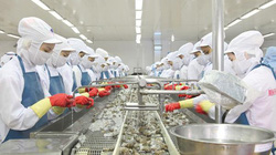 Doanh nghiệp thủy sản bứt phá ngoạn mục trong đại dịch nhờ bí quyết độc đáo