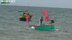 Bà Rịa - Vũng Tàu: Đã mắt cá nhảy tanh tách, tôm cua đầy thuyền trong ngày đầu đánh bắt trở lại