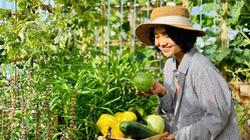Ở nhà mùa dịch, cô nàng 9X rủ chồng con lên sân thượng làm nông dân, trồng rau, dưa xanh mướt mát