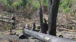 Chủ tịch tỉnh Phú Yên yêu cầu tạm dừng việc điều hành của một lãnh đạo Ban quản lý rừng phòng hộ