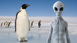 Bằng chứng cho thấy chim cánh cụt thực chất chính là người ngoài hành tinh