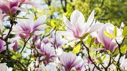 15 ngày tới, 4 con giáp mở ra vận may, sự nghiệp thuận buồm xuôi gió, đào hoa nở rộ