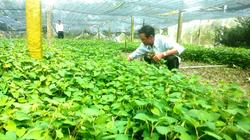 Thủ tướng yêu cầu xây dựng chính sách hỗ trợ nông dân khôi phục sản xuất