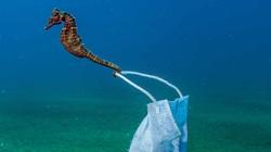 Khoảnh khắc cá ngựa kéo chiếc khẩu trang dưới nước lọt tóp ảnh đại dương đẹp nhất năm