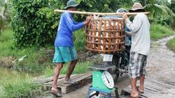 Khẩn trương gỡ khó cho sản xuất, xuất khẩu thủy sản