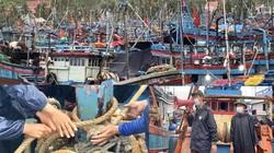 Quảng Ngãi: Sợ tàu chìm tại nơi neo đậu vì bão, ngư dân hối hả neo giằng chặt
