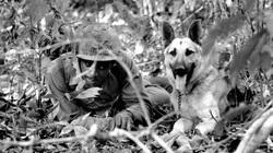 Lý giải việc chó quân sự của Mỹ chết như ngả rạ ở Việt Nam
