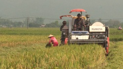 Liên minh HTX tỉnh Điện Biên: Kinh tế tập thể, động lực thúc đẩy phát triển nông nghiệp tại khu vực nông thôn-Phần 2
