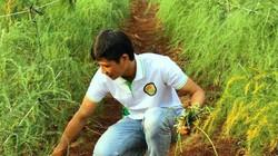 Chàng trai bỏ việc quản lý, về quê trồng măng tây làm giàu