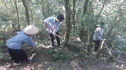 Tân Uyên tăng cường công tác quản lý, bảo vệ rừng