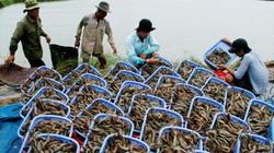 Mỹ, Trung Quốc, Nhật Bản chi 17,6 tỷ USD mua nông sản Việt Nam, giá 4 mặt hàng này tăng vọt
