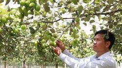 Tỉnh Ninh Thuận đã ngăn chặn thành công loài côn trùng chỉ thích đục trái táo đặc sản