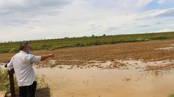 Làm giàu ở nông thôn: Trồng lúa cách lạ, tiền bán thóc thì ít mà tiền bán 2 con đặc sản trong ruộng thì nhiều