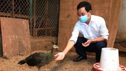 """Lạ mà hay: Nuôi chim """"quý tộc"""" như nuôi gà ta, cứ 1 cặp đẹp long lanh bán giá 40-50 triệu"""