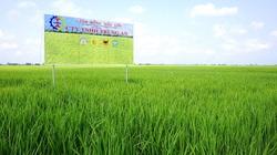 Nông nghiệp Công nghệ cao Trung An ước lãi 40 tỷ trong quý III