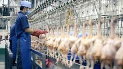 Cảnh báo khan hiếm cục bộ mặt hàng thịt gà dịp Tết Nguyên đán 2022